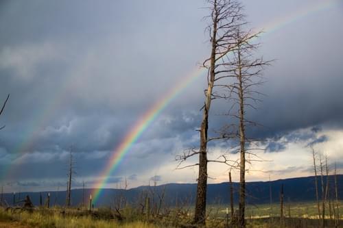 Pike rainbow